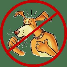 coughdog